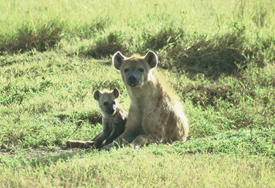 hyena and pup