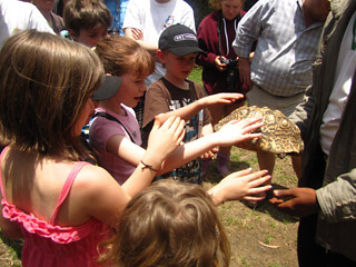 kids touch tortoise